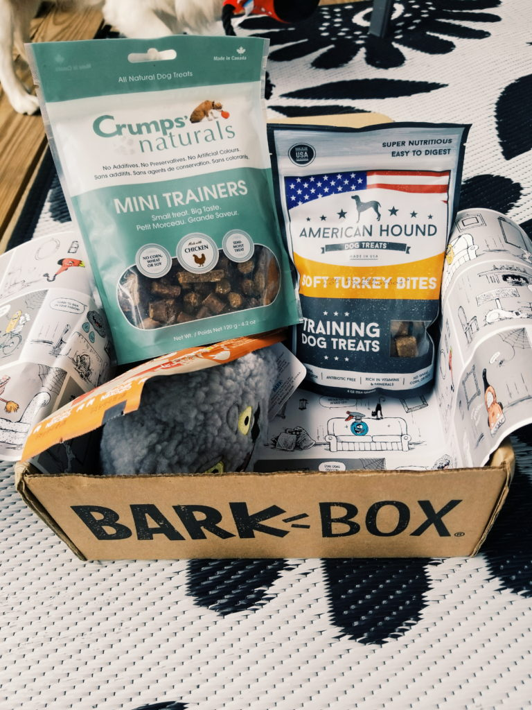 Happy Howl-o-ween: Barkbox Review - The Palmetto Peaches - palmsinatl.com