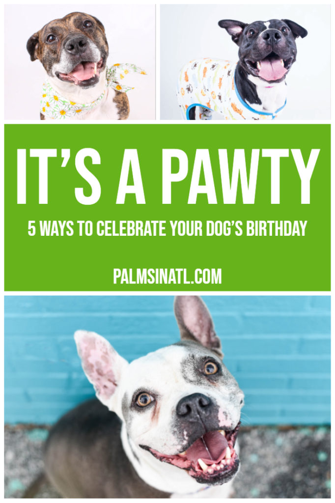 It's a Pawty! - 5 Ways to Celebrate Your Dog's Birthday - The Palmetto Peaches - palmsinatl.com