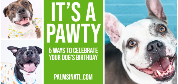 It's A Pawty - 5 Ways To Celebrate Your Dog's Birthday